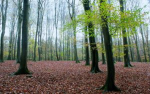 Idylliske Binning Wood er en åpen, økologisk gravlund i et skogområde, men strenge krav til nedbrytbarhet. (http://www.binningwood.co.uk/)